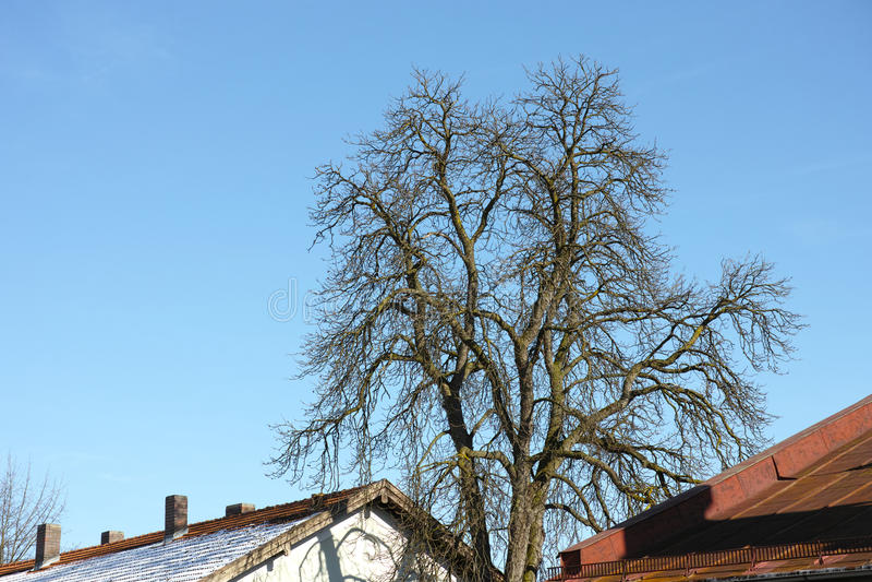 Download Árvore na cidade imagem de stock. Imagem de elevado, se - 29837555
