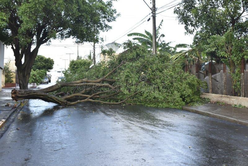 Árvore que caiu após uma tempestade na área urbana tronco de árvore velho caído na cidade foto de stock royalty free