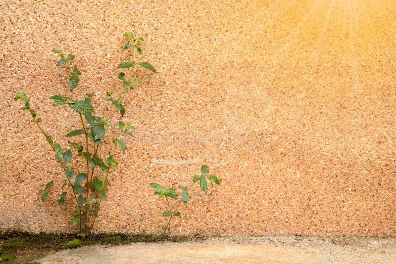 Árvore que cresce acima no assoalho concreto fotos de stock royalty free