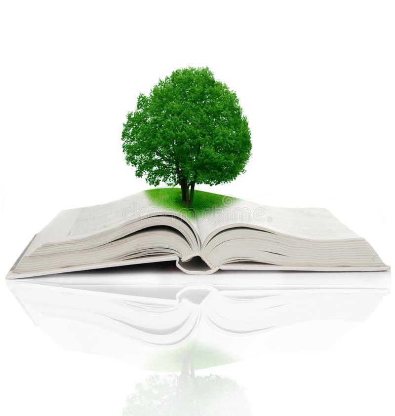 Árvore que cresce de um livro imagens de stock