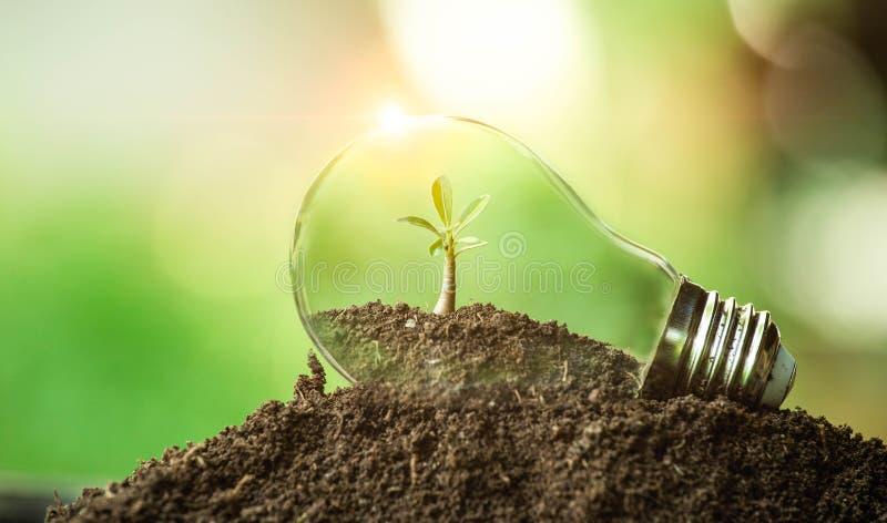 A árvore que cresce no solo em uma ampola Ideia criativa do Dia da Terra ou da energia e do conceito de salvaguarda do ambiente imagens de stock royalty free