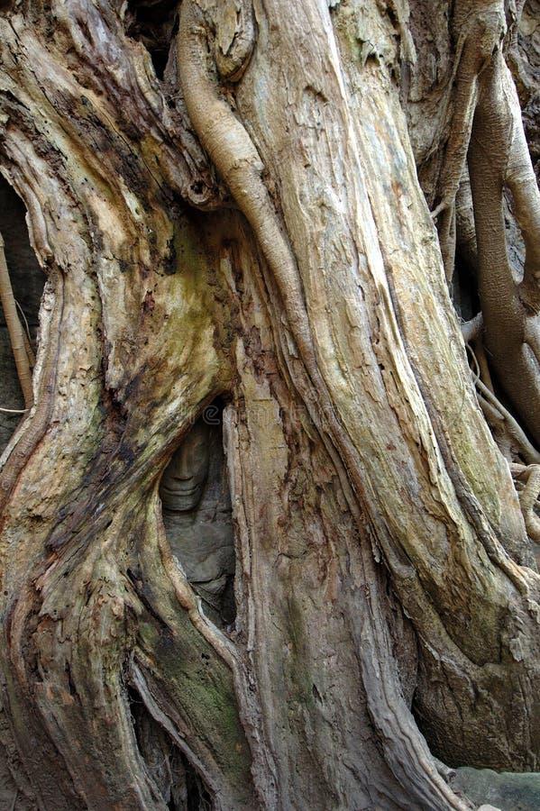 Árvore que cresce sobre buddha fotografia de stock