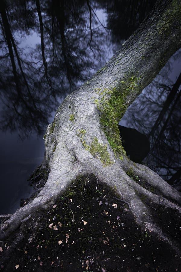 Árvore que cresce sobre lakeshore fotografia de stock