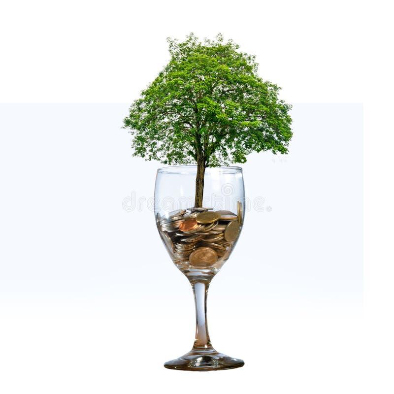 Árvore que de vidro da moeda da mão do isolado da moeda da árvore a árvore cresce na pilha Dinheiro da economia para o futuro As  imagens de stock