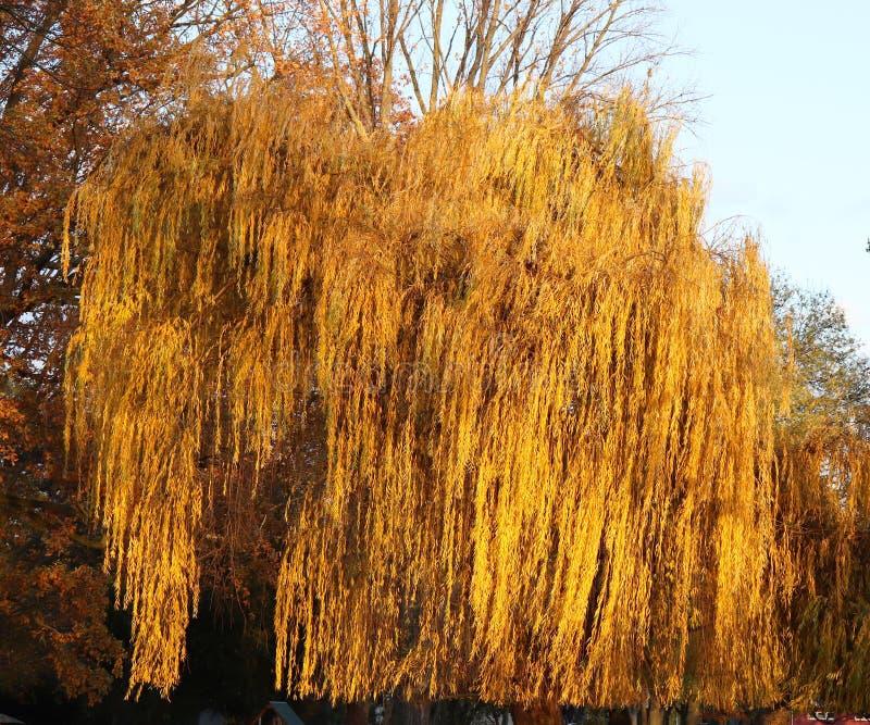 Árvore que olhares como um animal em Alemanha fotos de stock royalty free