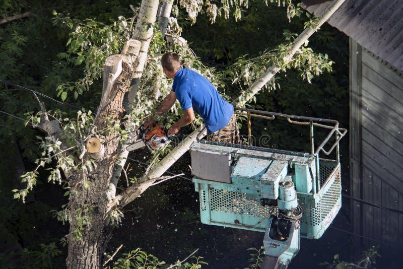 Árvore que poda e que vê por um homem com uma serra de cadeia, estando em uma plataforma de um elevador de cadeira mecânico, na a imagem de stock
