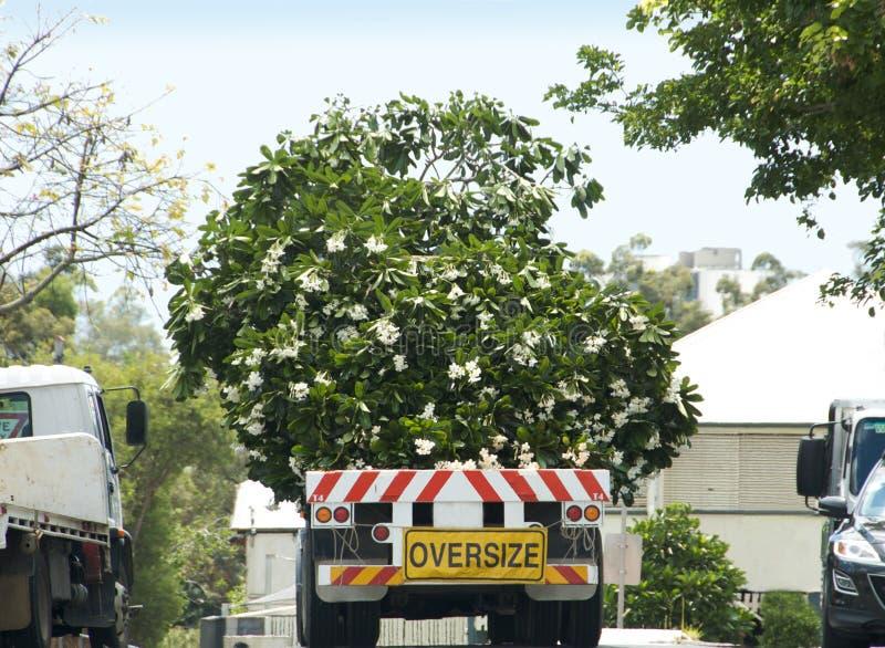 Árvore que viaja no caminhão fotografia de stock