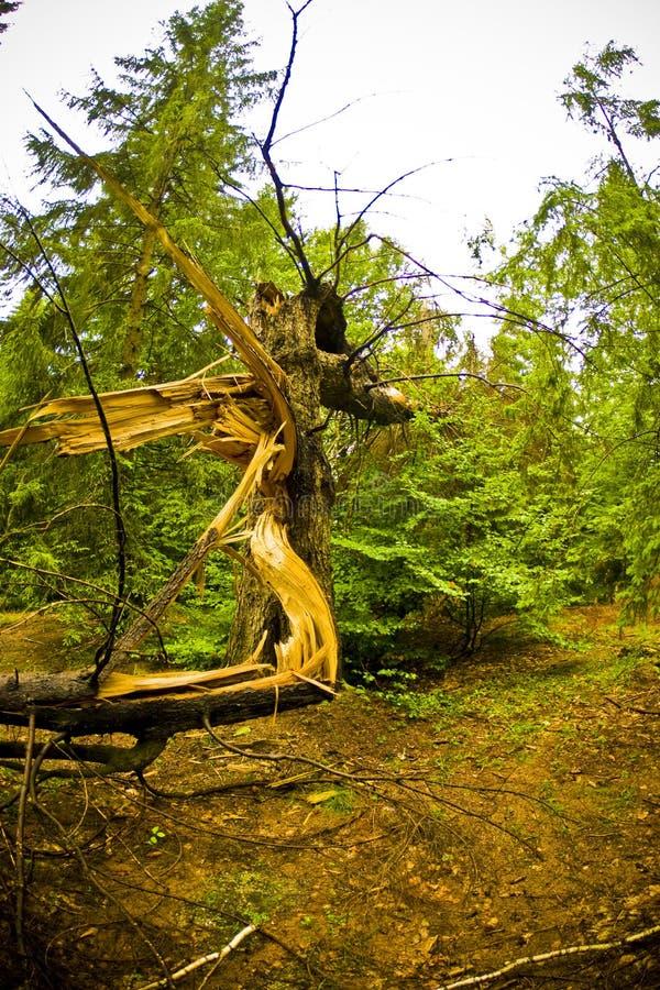 Árvore quebrada foto de stock royalty free