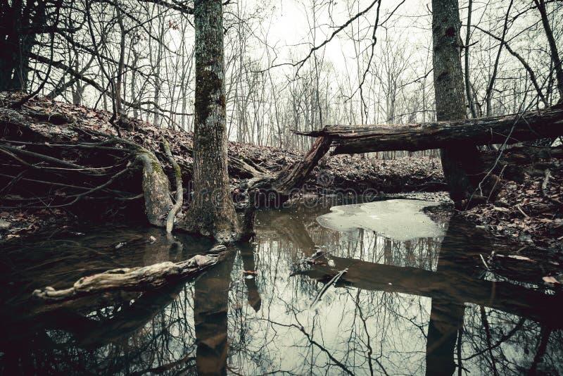 Árvore quebrada acima do rio pequeno da floresta Uma paz do gelo que flutua na água imagem de stock