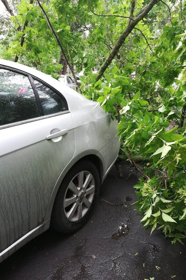 Árvore quebrada em um close-up do carro fotos de stock