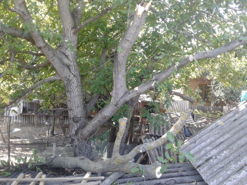 árvore quebrada furacão imagem de stock
