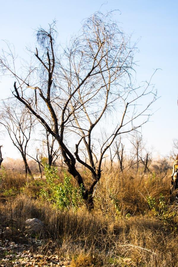 Árvore queimada do dia de verões fotos de stock royalty free