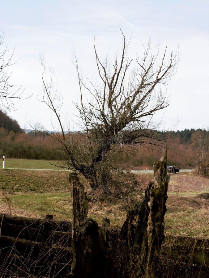 Árvore queimada e inoperante foto de stock royalty free