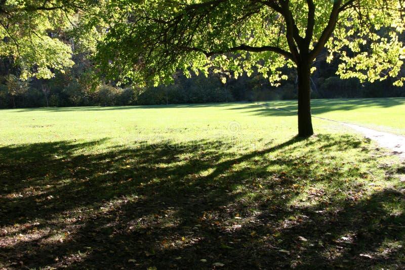 Árvore retroiluminada fotos de stock royalty free
