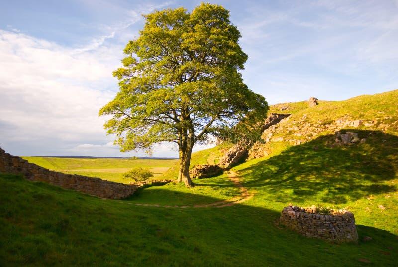 Árvore romana II foto de stock royalty free
