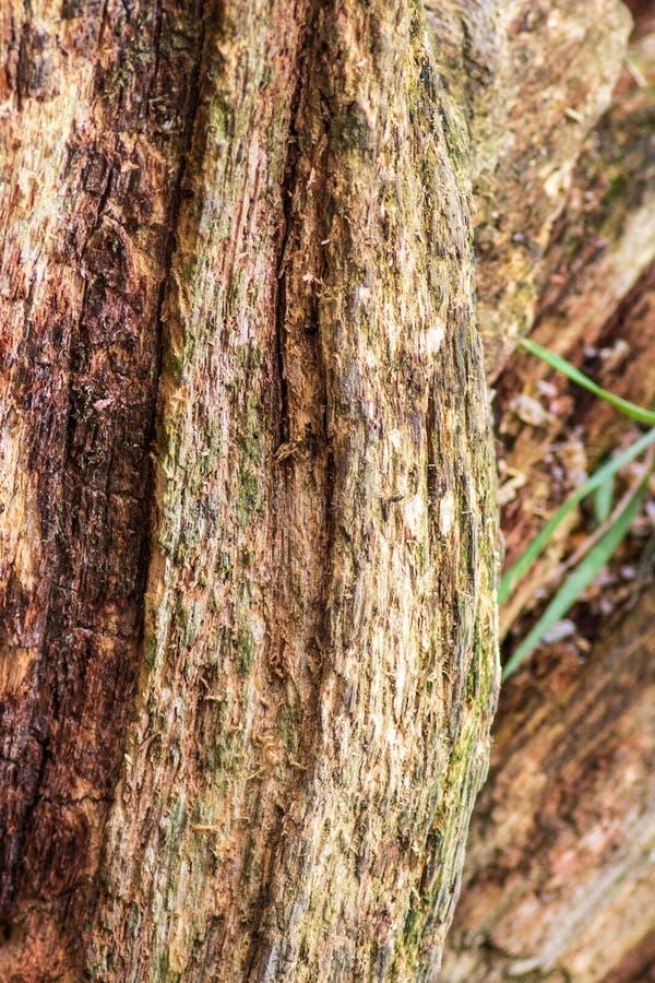 Árvore Rotting fotografia de stock