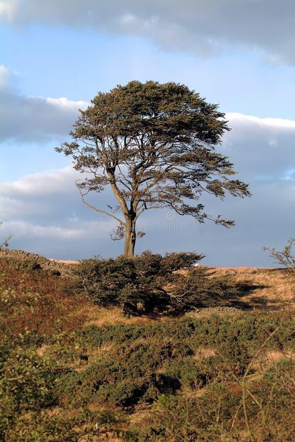 Árvore só