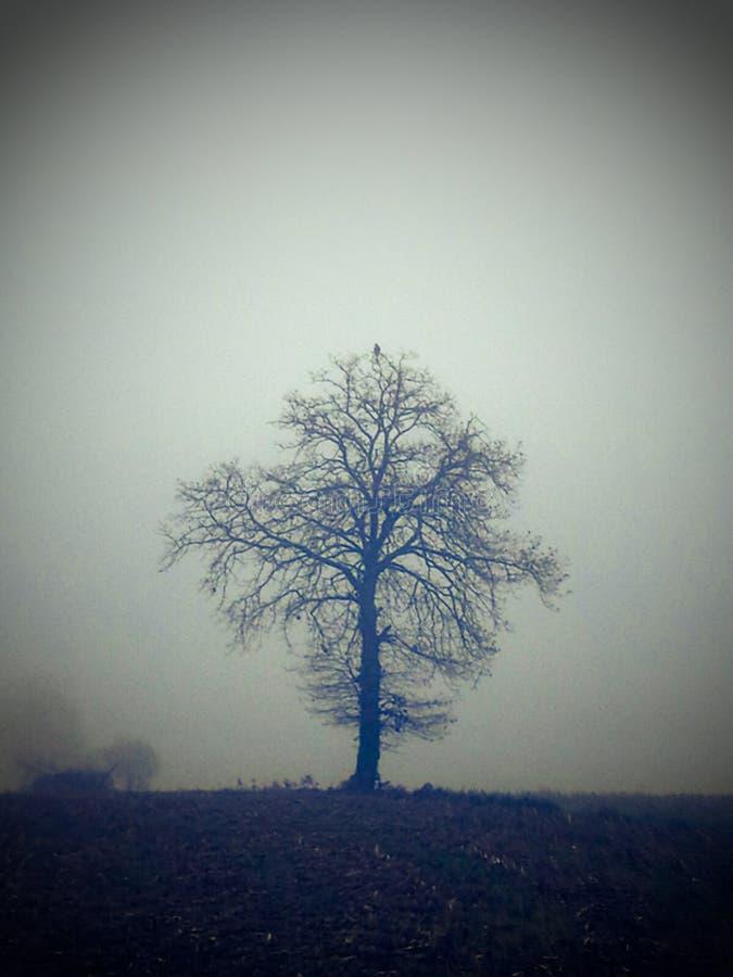 Árvore só fotos de stock