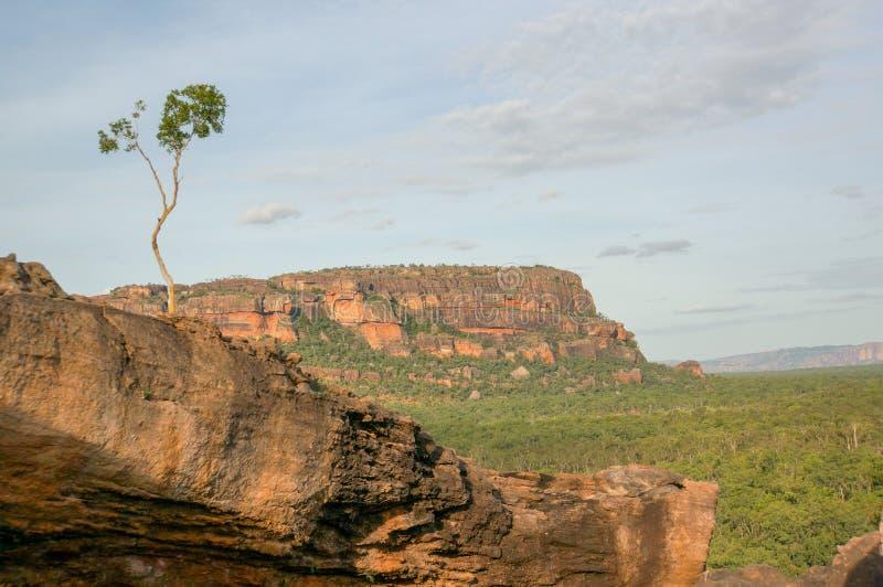 árvore só bonita na vigia de Nadab no ubirr, parque nacional do kakadu - Austrália fotografia de stock royalty free
