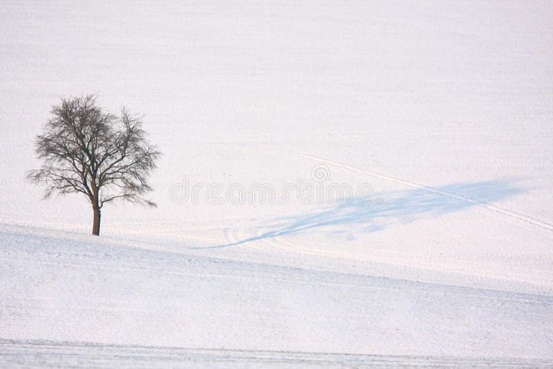 Árvore só do inverno fotografia de stock royalty free
