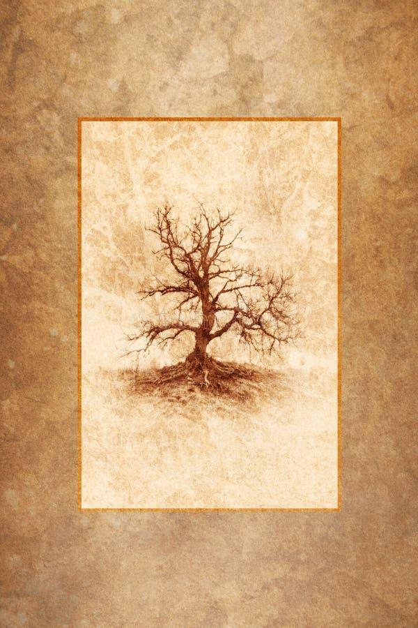 Árvore só do inverno fotos de stock