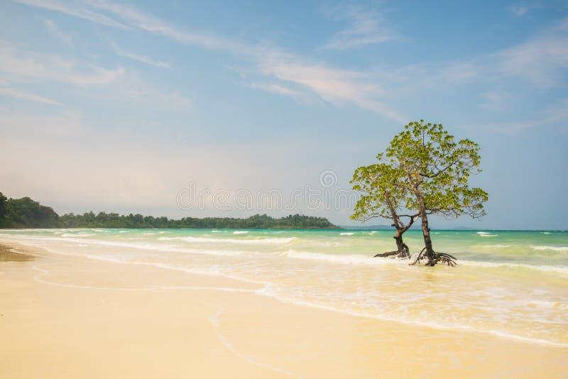 Árvore só dos manguezais fotografia de stock royalty free