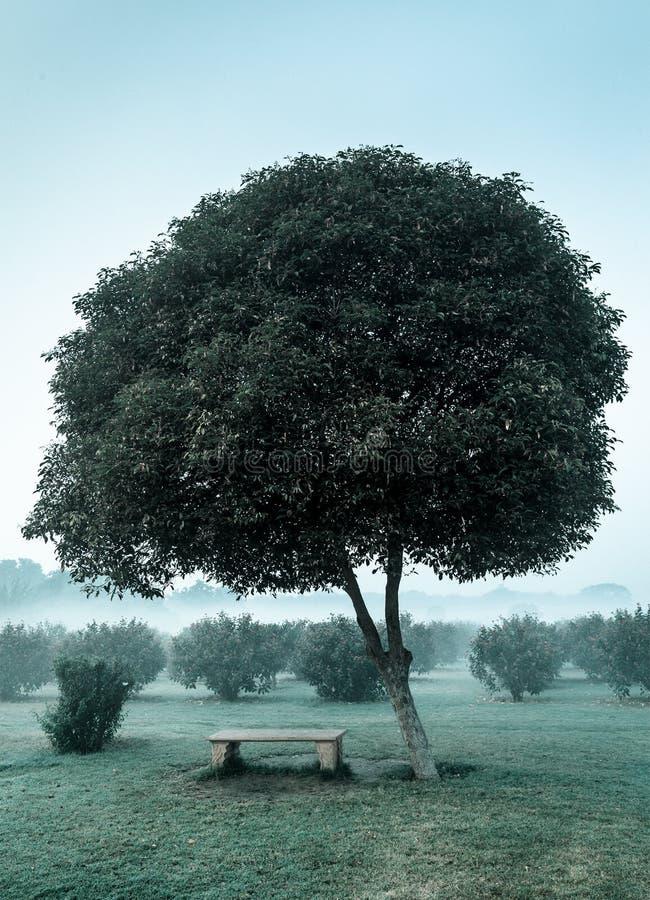 Árvore só e banco vazio fotos de stock royalty free