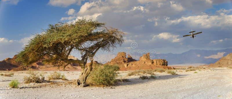 Árvore só e pedras originais no parque geological Timna imagens de stock