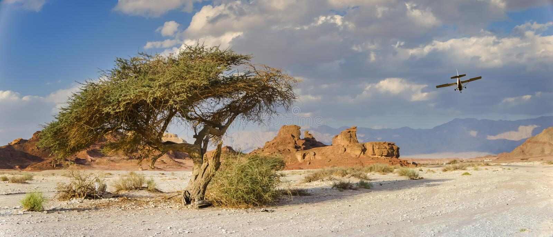 Árvore só e pedras originais no parque geological Timna fotos de stock