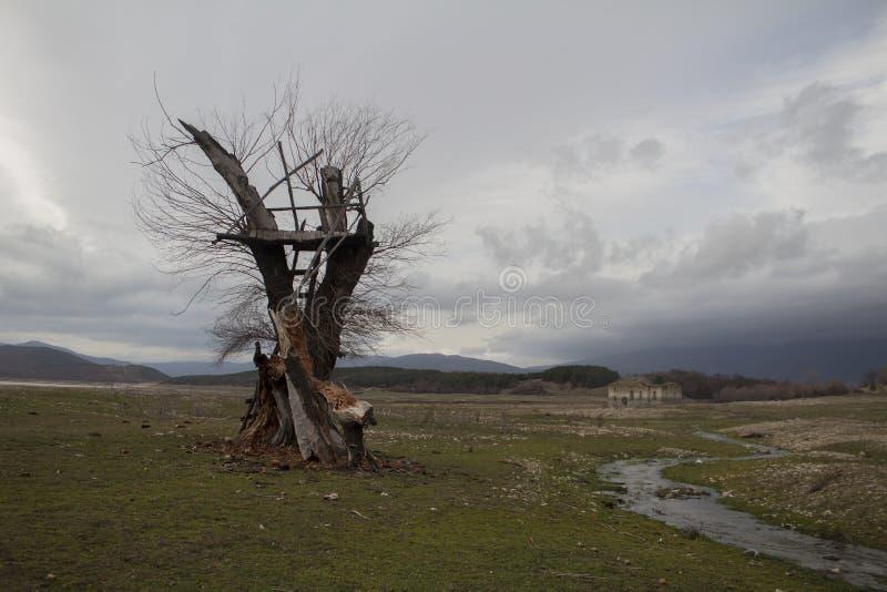Árvore só e uma construção velha atrás mesmo antes de para começar chover fotos de stock