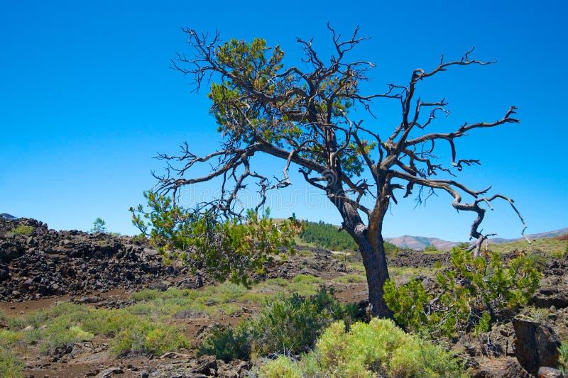 Árvore só em Idaho imagem de stock
