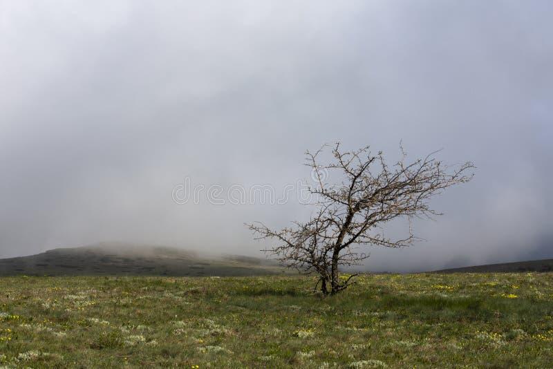 Árvore só em uma nuvem branca nas montanhas fotografia de stock royalty free