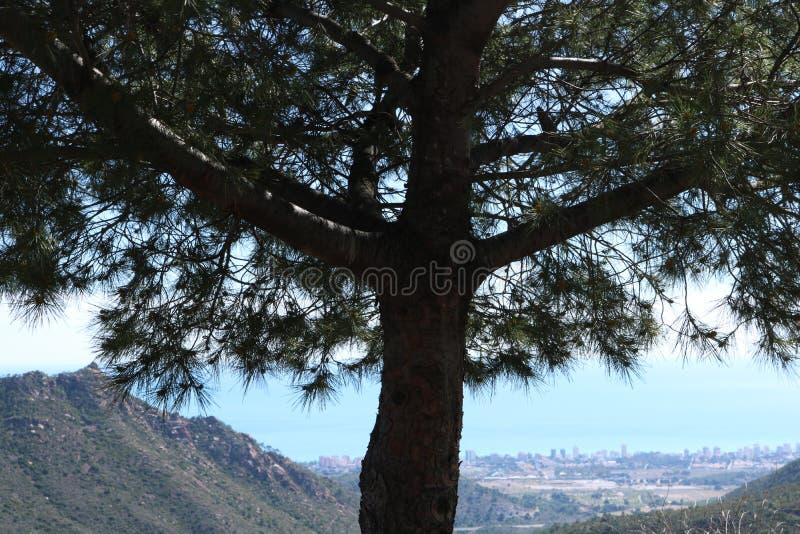Árvore só em uma paisagem mediterrânea fotografia de stock royalty free