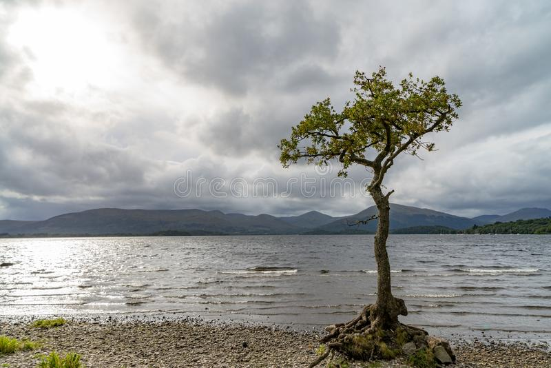 Árvore só Loch Lomond scotland imagem de stock royalty free