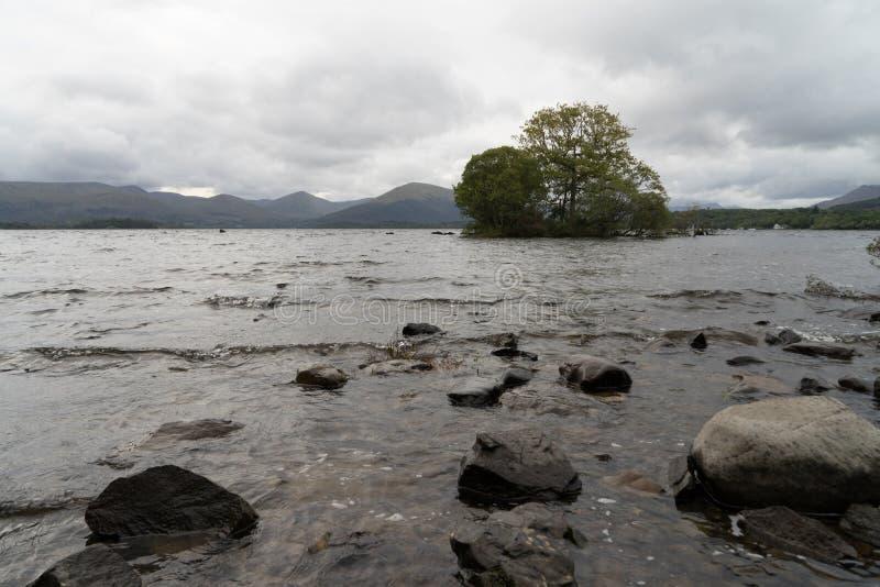 Árvore só Loch Lomond scotland fotografia de stock