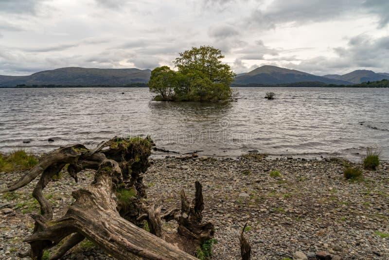 Árvore só Loch Lomond scotland fotos de stock
