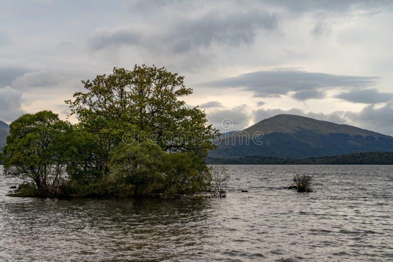 Árvore só Loch Lomond scotland fotos de stock royalty free