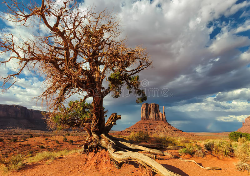 A árvore só luta pela vida no deserto fotos de stock