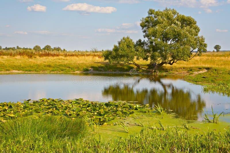 Árvore só na costa do lago imagem de stock royalty free