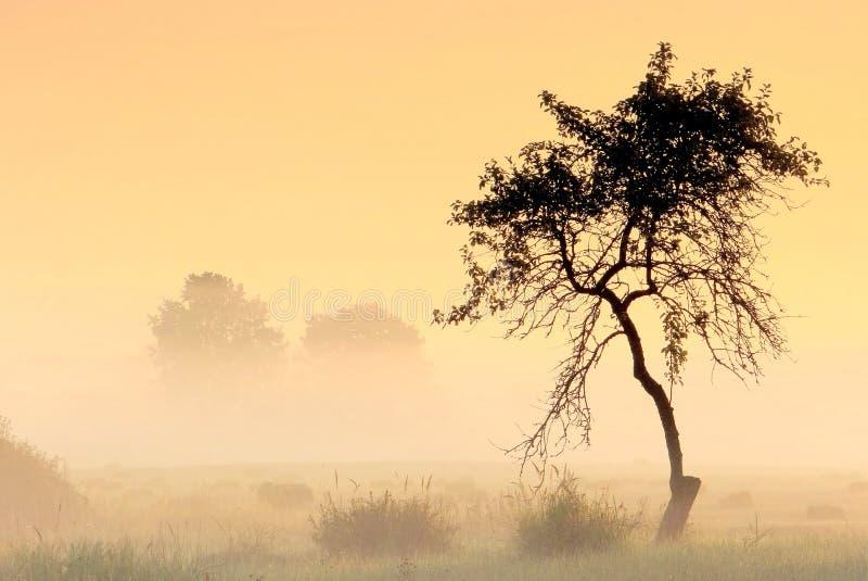 Árvore só na névoa imagem de stock royalty free