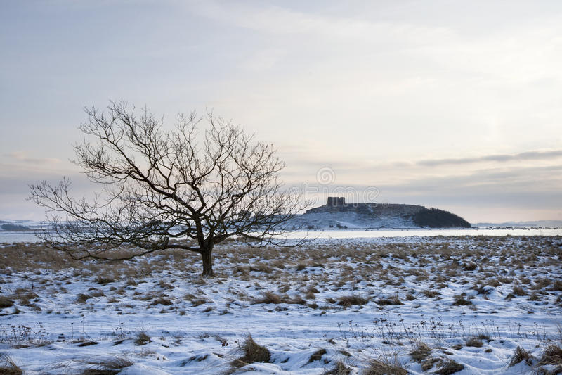 Árvore só na neve fotos de stock