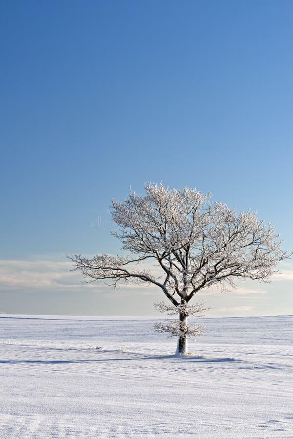 Árvore só na neve fotografia de stock