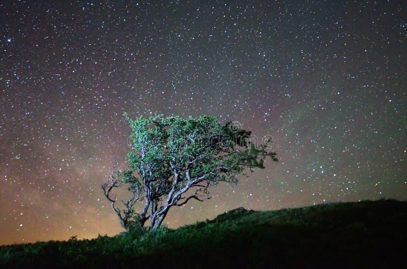 Árvore só na noite imagem de stock royalty free