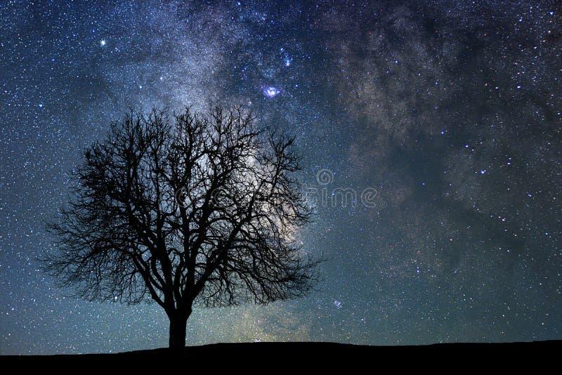 Árvore só na noite estrelado Via Látea foto de stock