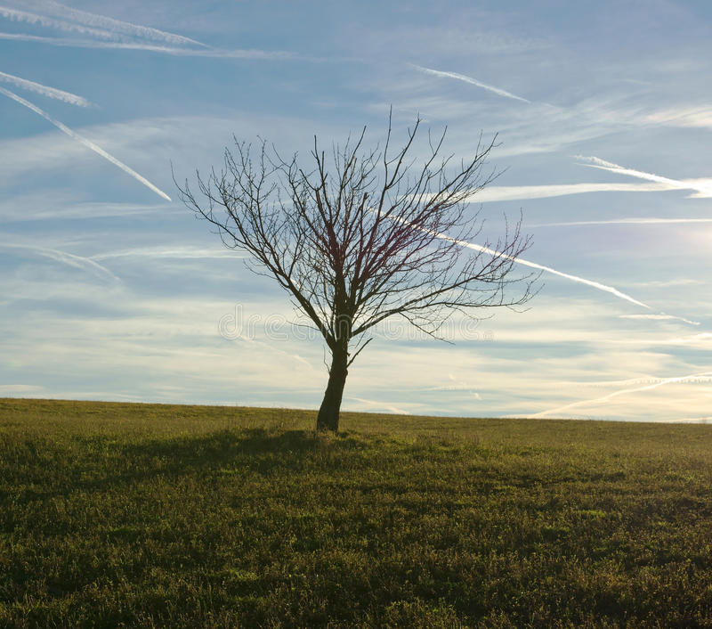 Árvore só no campo de grama imagens de stock royalty free