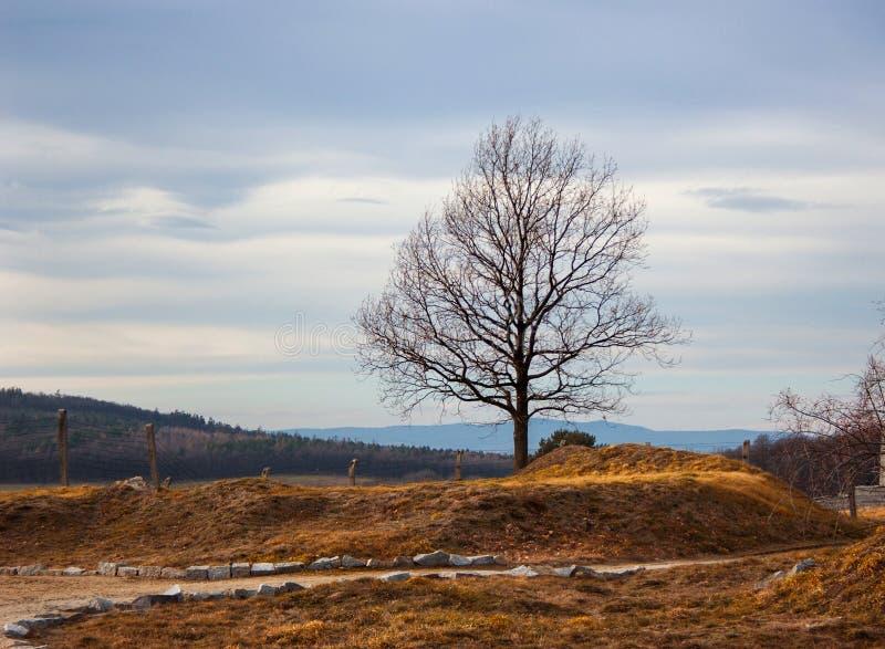 Árvore só no campo do outono fotos de stock royalty free