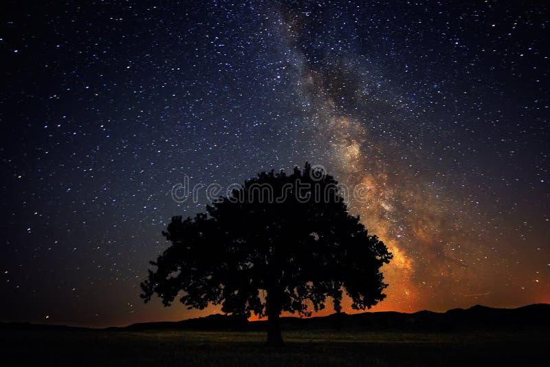 Árvore só no campo sob a galáxia da Via Látea fotos de stock royalty free