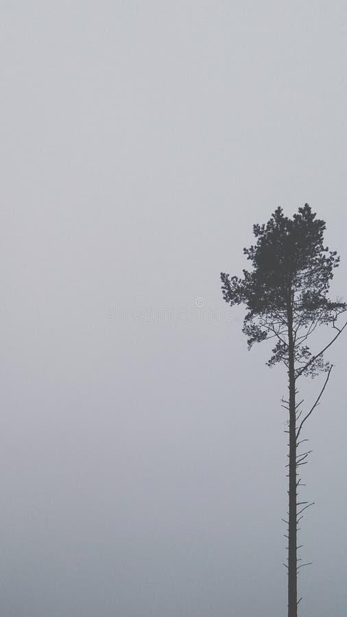 Árvore só no dia nebuloso imagens de stock