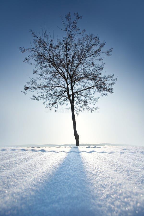 Árvore só no inverno foto de stock royalty free