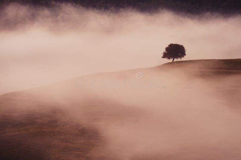 Árvore só no nascer do sol imagens de stock